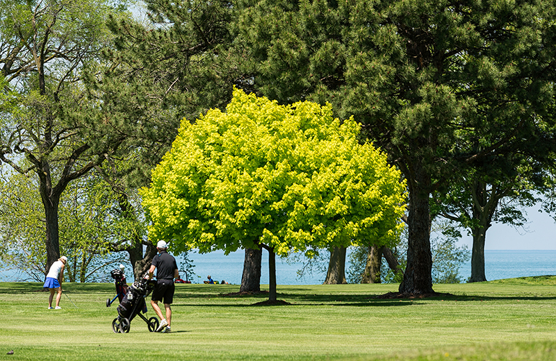 Golf : Niagara-on-the-Lake
